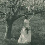 Greatest The Old Apple Tree Poem Pic579