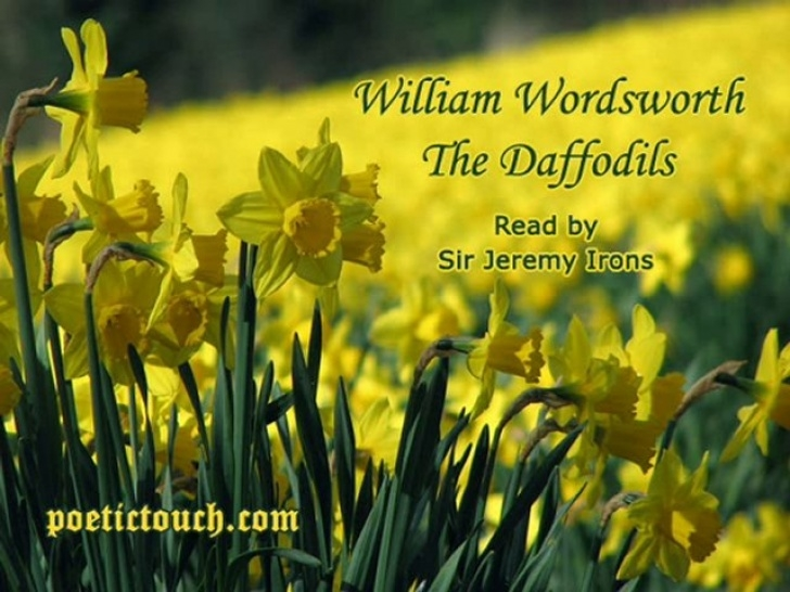 Greatest To Daffodils Wordsworth Picture056