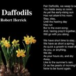 Greatest To The Daffodils Poem Pics556