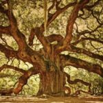 Greatest Under The Old Oak Tree Poem Pic188