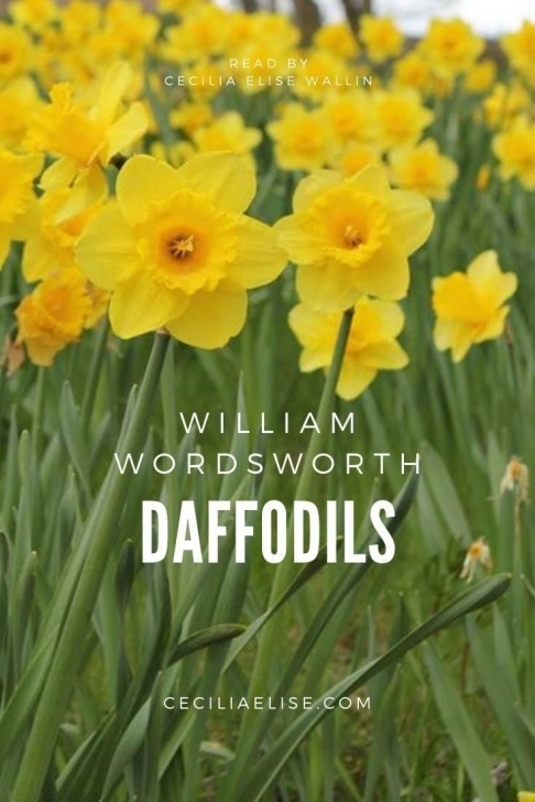 Greatest Yellow Daffodils Poem Pics495