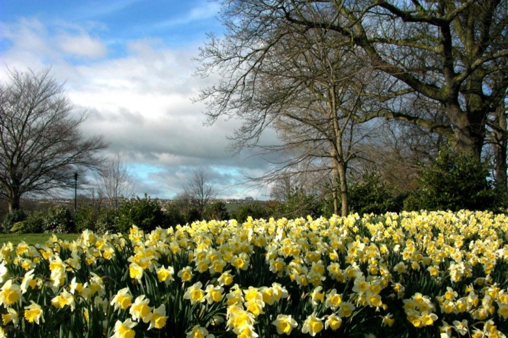 Inspirational Daffodils By Williams Wordsworth Picture506