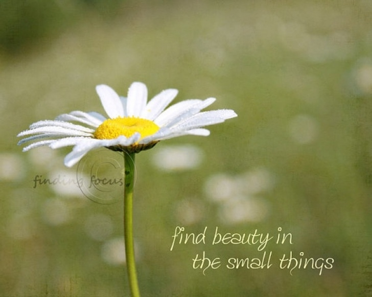 Inspirational Daisy Flower Poem Photo517