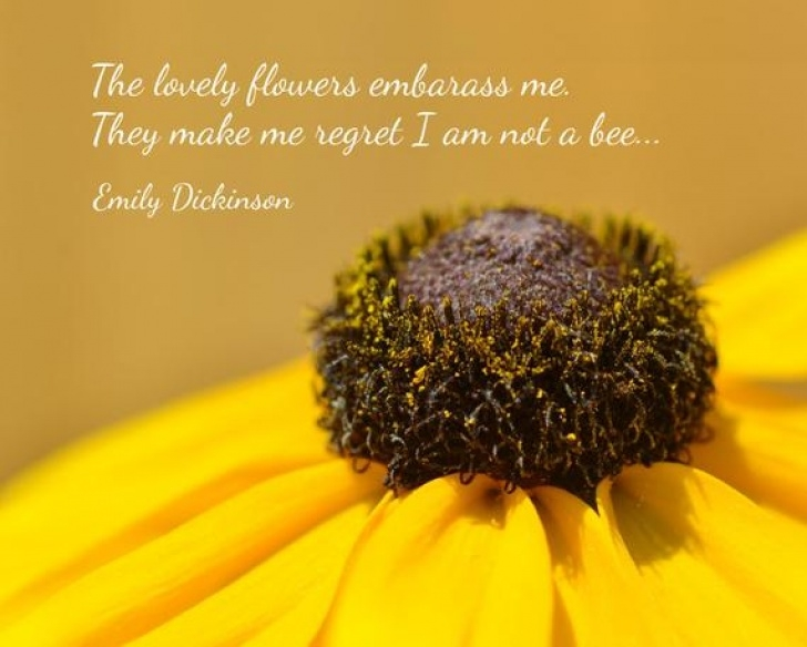 Inspirational Emily Dickinson Flower Poems Pic672