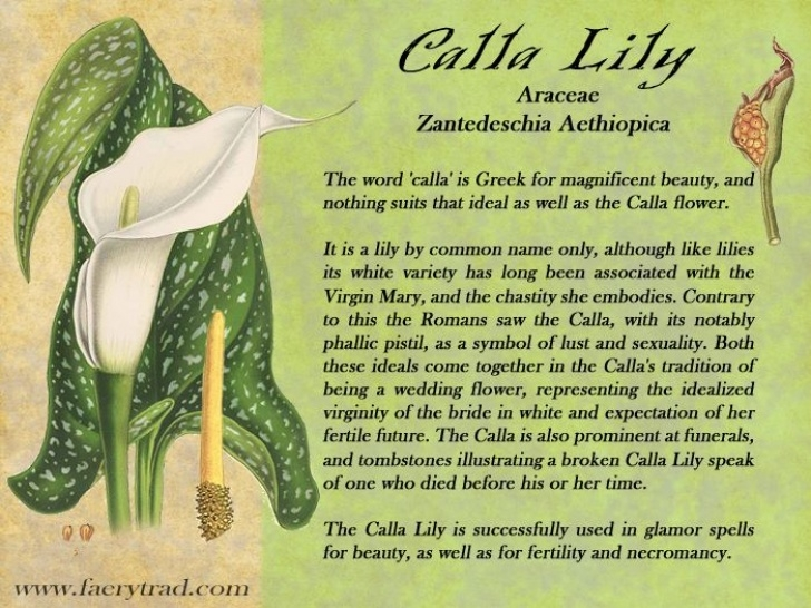 Inspirational Lily Flower Poem Image692
