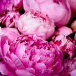 Inspirational Mary Oliver Peonies Pics026