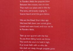 Inspirational Poppies In Flanders Field Poem Pic436