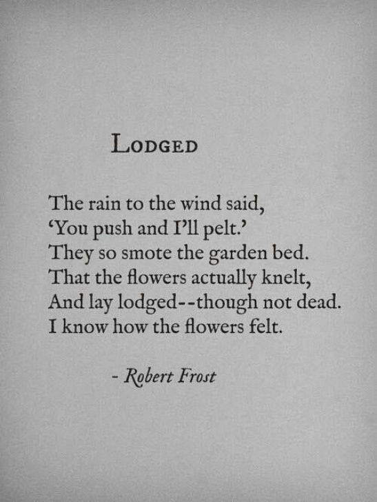 Inspirational Robert Frost Flower Poem Pics540