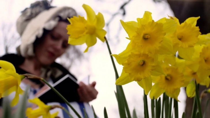 Inspirational William Wordsworth Poem Daffodils Pic043