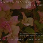 Inspiring Poem About Bougainvillea Pic110