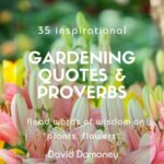 Inspiring Poem About Weeds And Flowers Pics472