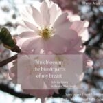 Inspiring Poem On Cherry Blossom Picture939