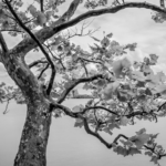 Inspiring Poems About Leaves And Trees Image229