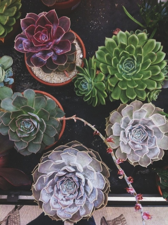 Inspiring Poems About Succulents Pics992