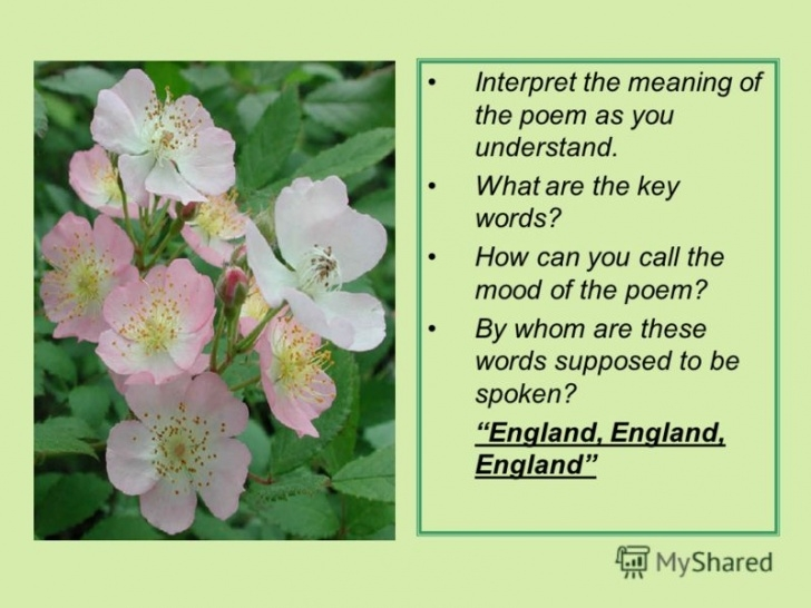 Inspiring Poetry About Flowers In English Pics662