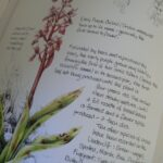 Inspiring The Poem Orchids Pics045