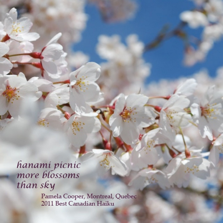 Inspiring To Blossoms Poem Photo234