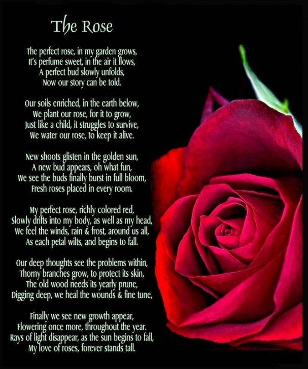Inspiring You Are My Rose Poem Image249