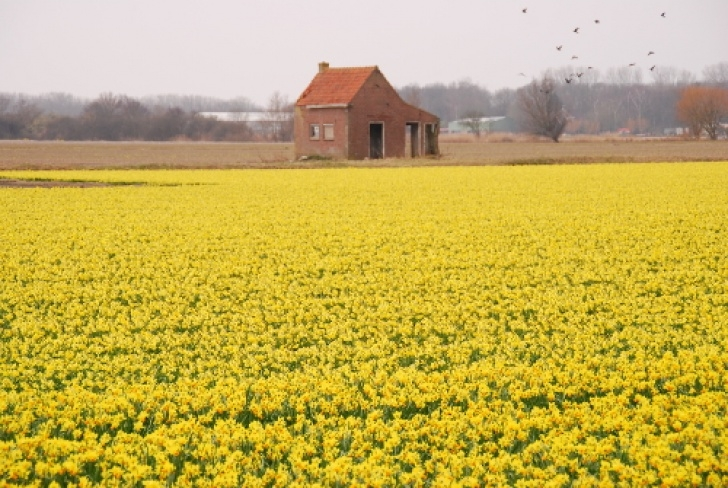 Marvelous Famous Poem About Daffodils Image660