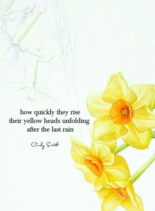 Marvelous Poem About Daffodils Spring Pic524