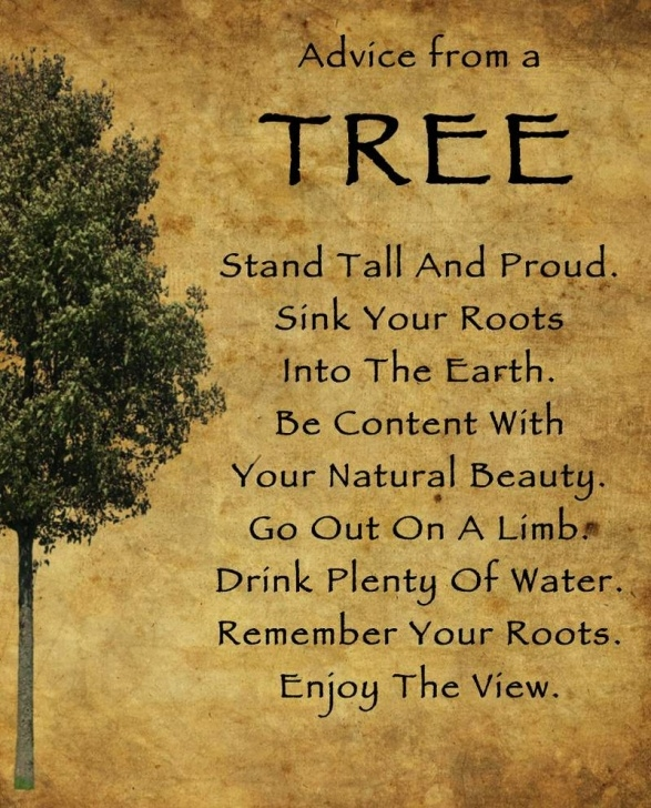 Marvelous Poems About Trees And Life Photo870
