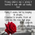 Marvelous Rose Bud Poem Picture174