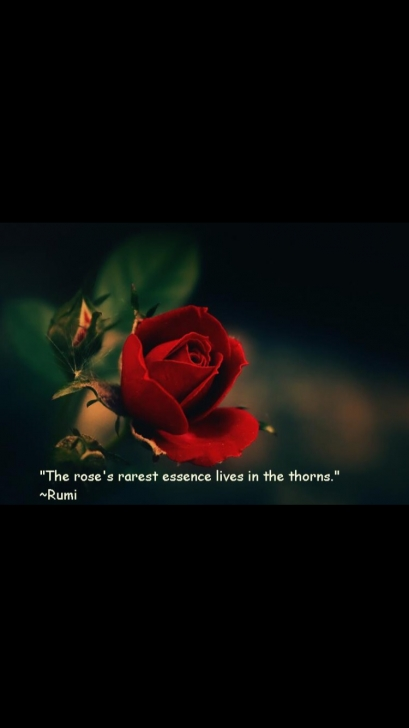 Marvelous Short Rose Poem Photo850