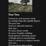 Marvelous Three Trees Poem Image449