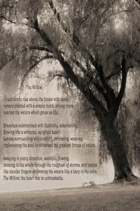 Marvelous Trees Trees Trees Poem Photo342