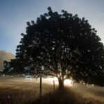 Marvelous Walnut Tree Poem Photo867