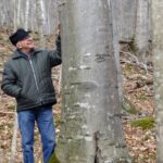 Most Famous Beech Tree Poem Picture792