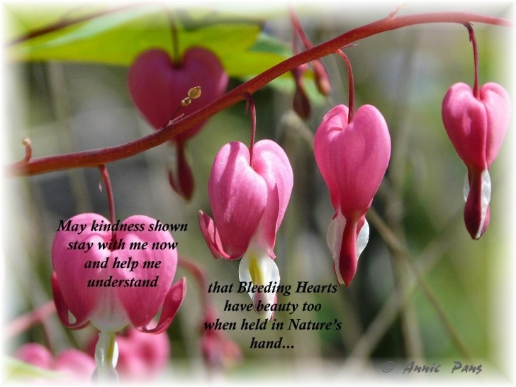 Most Famous Bleeding Heart Poem Pics072