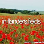 Most Famous Flanders Field The Poppies Grow Image216