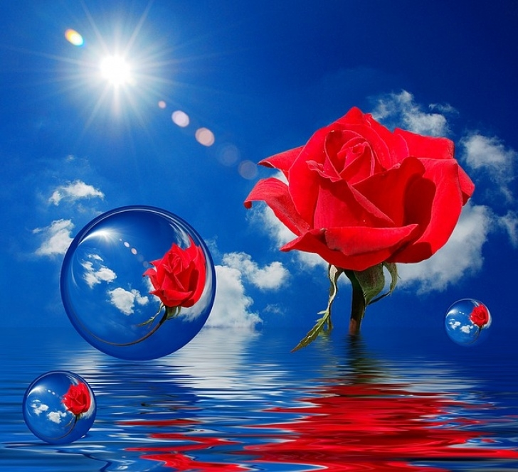 Most Famous Rose Is Red Sky Is Blue Pics281