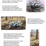 Most Famous Snowdrop Poem Ted Hughes Photo474