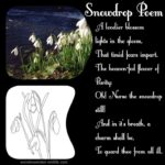Most Famous Snowdrop Ted Hughes Poem Pics268