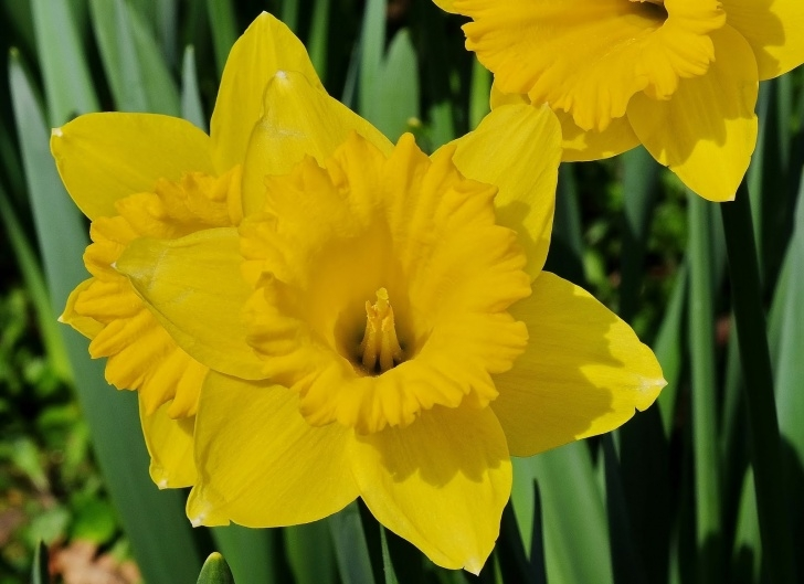 Most Famous The Golden Daffodils Poem Photo712