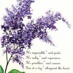 Most Iconic Amy Lowell Lilacs Picture943