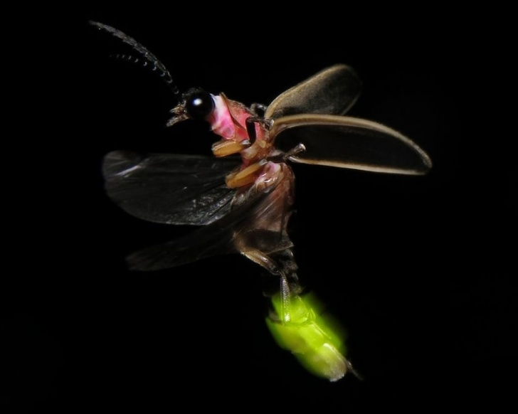 Most Iconic Fireflies In The Garden Poem Picture215