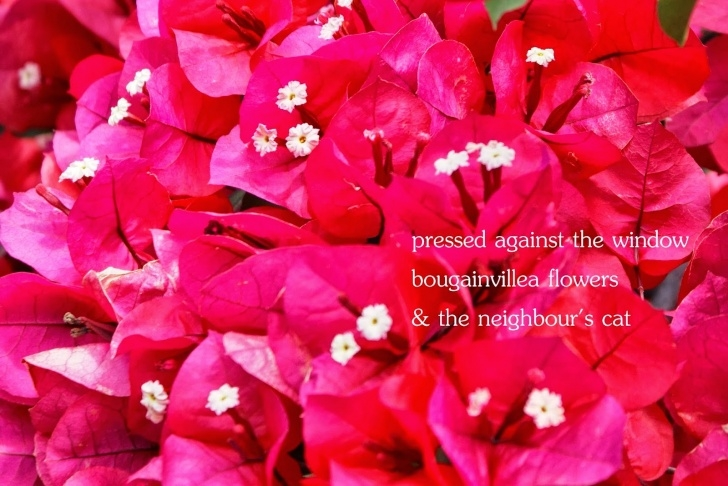 Most Iconic Haiku Poems About Flowers Image516