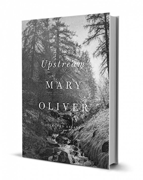 Most Iconic Mary Oliver Garden Picture395