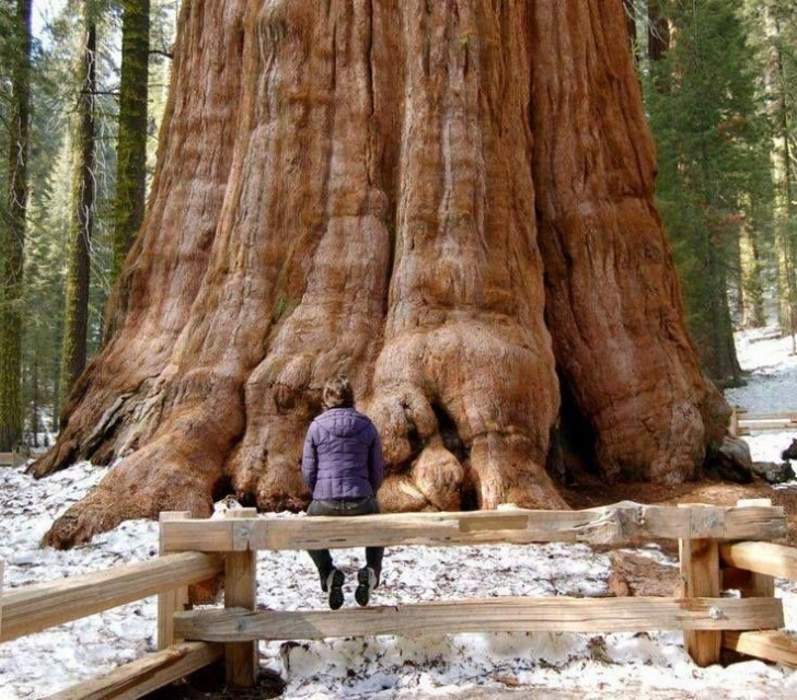 Most Iconic Planting A Sequoia Poem Pics379