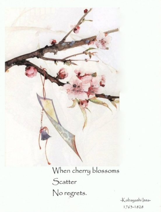 Most Iconic Poem On Cherry Blossom Photo676
