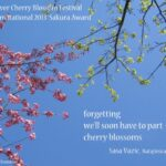 Most Iconic Poem On Cherry Blossom Picture425
