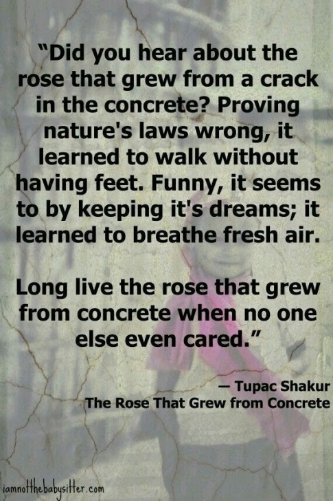 Most Iconic Rose Growing Out Of Concrete Poem Pics910