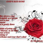 Most Iconic Roses Are Poems Pic315