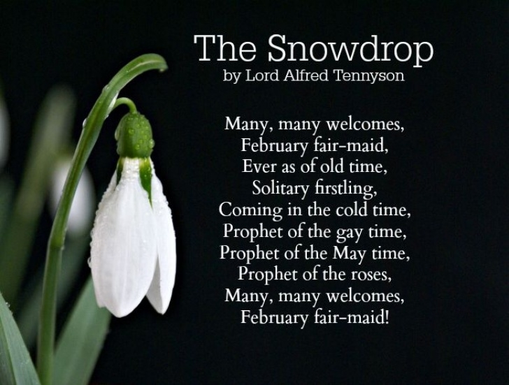 Most Iconic Snowdrop Ted Hughes Poem Image041