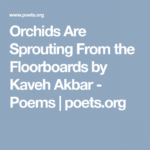 Most Iconic The Poem Orchids Picture907