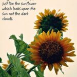 Most Iconic The Sun And Her Flowers Sunflower Poem Pic919