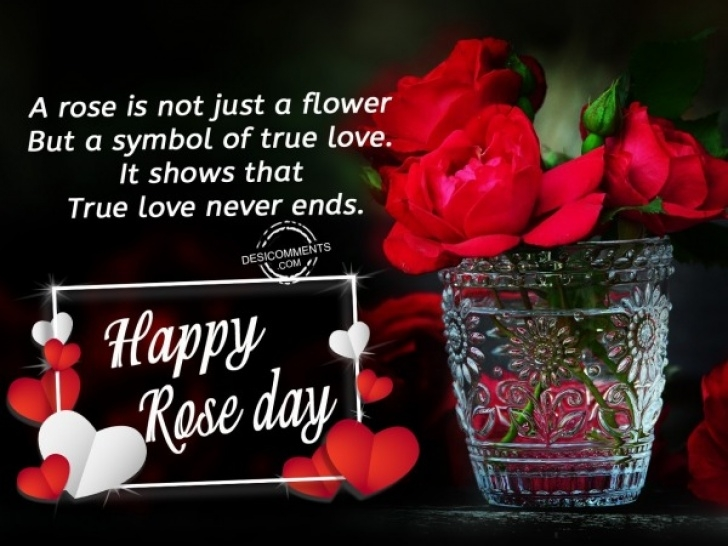 Most Popular Dying Rose Poem Photo008